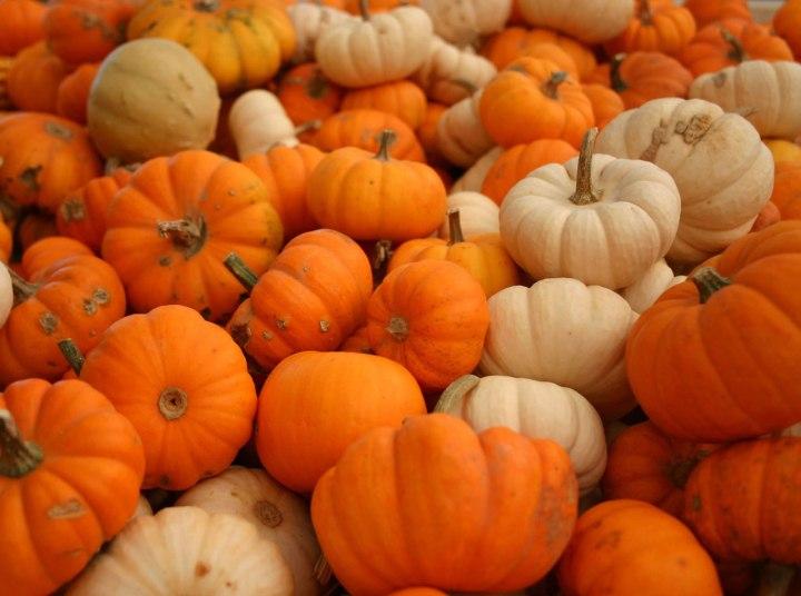 plenty-of-pumpkins